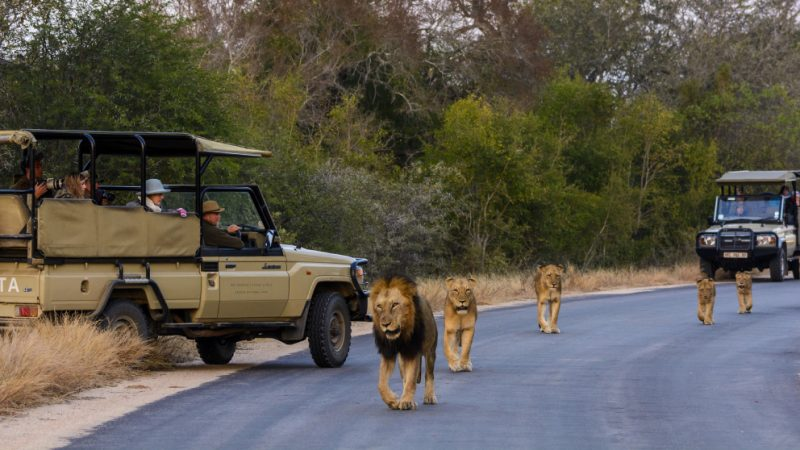 Beyond Kruger – The Underrated Parks and Attractions of South Africa